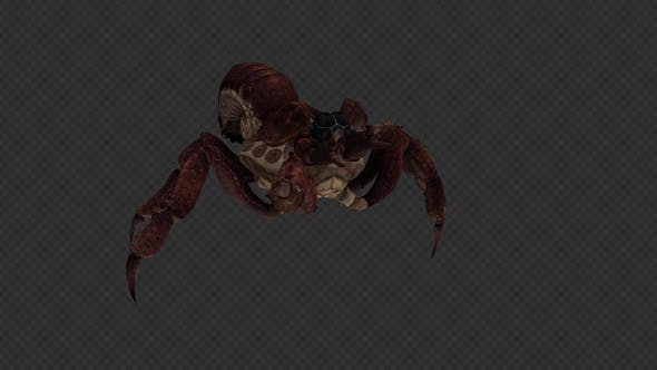 Thumbnail for Spider Run And Walk Pack 8 in1