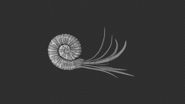 Nautiloidea Swim Pack 4 In 1