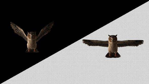 Thumbnail for Owl Glide