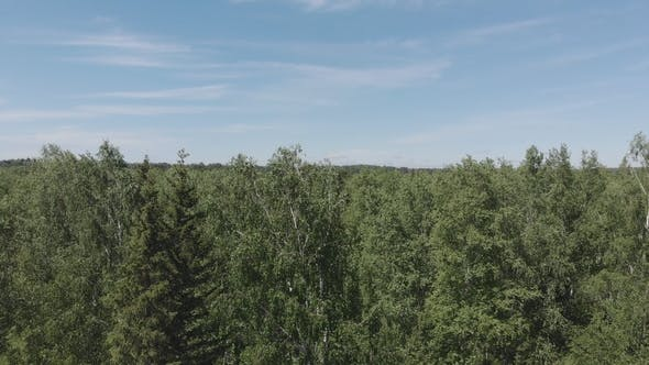 Flying Over the Siberian Taiga in the Natural Reserve Stolby