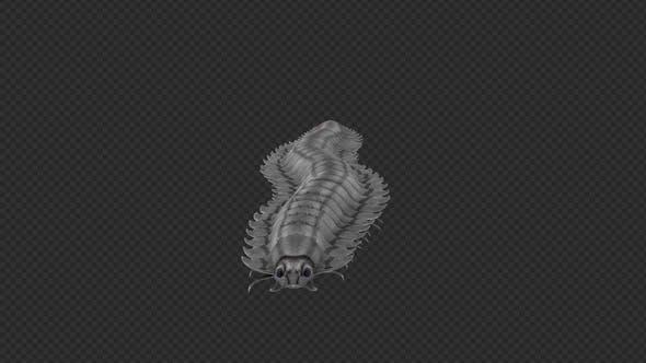 Thumbnail for Centipede Arthropluera Startled Spit Run Pack 12In1