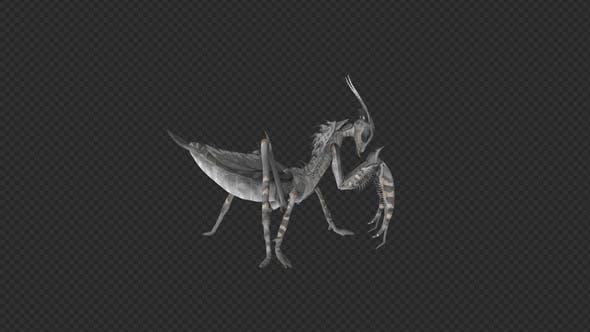 Mantis Walk Run Swim Pack 6In1