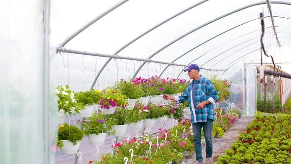 Thumbnail for Gardener Supervising Plants In Greenhouse