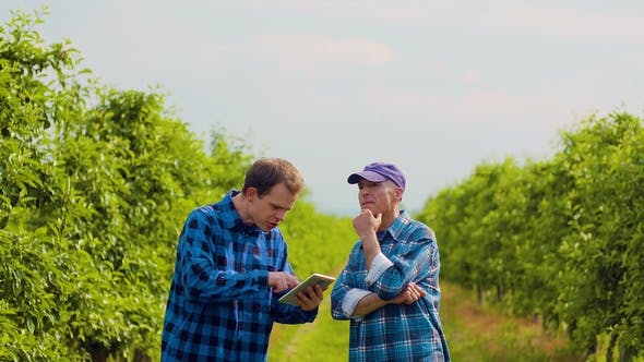 Thumbnail for Farmer Examining Leaves While Colleague Using Digital Tablet