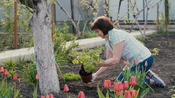Thumbnail for Woman Planting a Plant