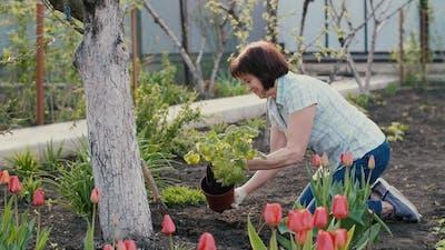 Woman Planting a Plant