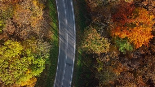 Aerial of Car Driving Through Sunny Autumn Forest