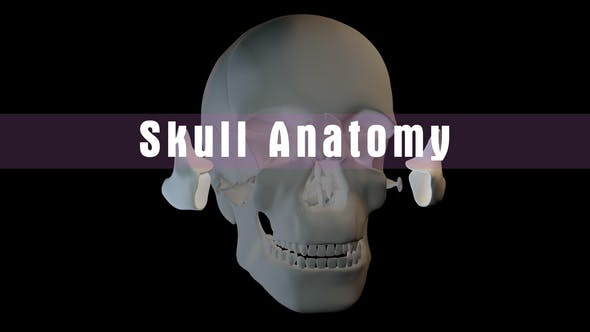 Thumbnail for Skull Anatomy