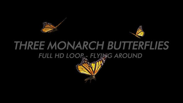 Thumbnail for Butterflies - Monarch - Three Flying Around
