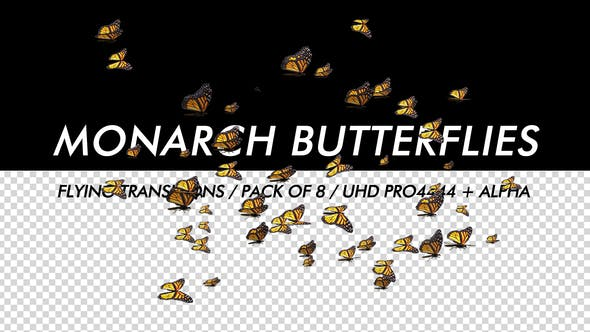 Thumbnail for Butterflies - Monarch - Pack of 8 Transitions - 4K