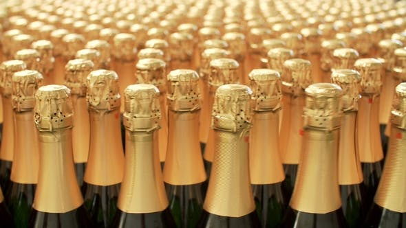 Thumbnail for Champagne Bottles on Factory Conveyor Belt