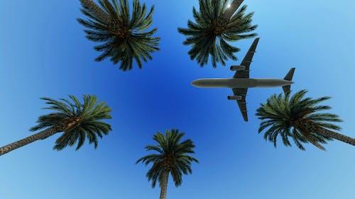 Passagierflugzeug über Palmen