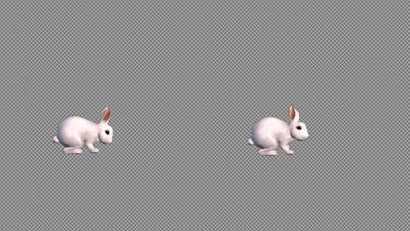 Thumbnail for White Rabbit