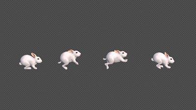 White Rabbit Jumping
