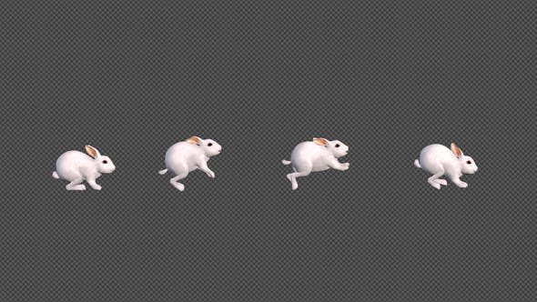 Thumbnail for White Rabbit Jumping