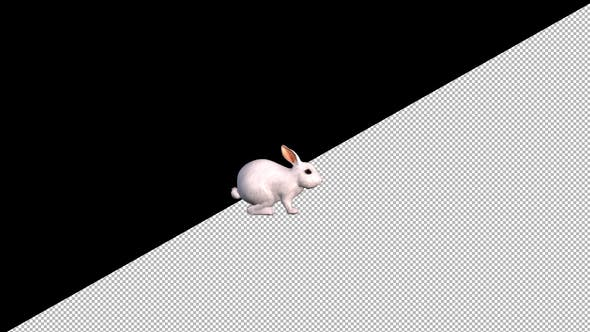 Thumbnail for White Rabbit Idle