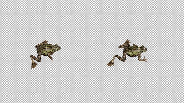 Thumbnail for Frog Walk Top