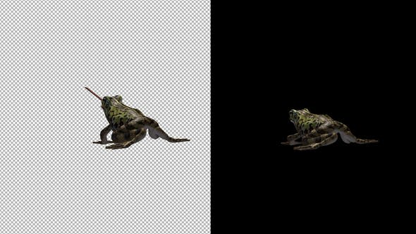 Thumbnail for Frog Catching Back View
