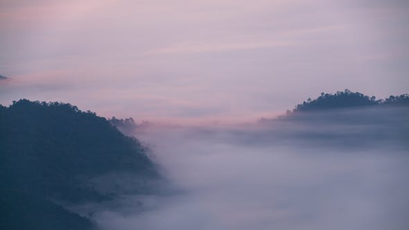 Thumbnail for Fog Moves Through Forest On Mountain