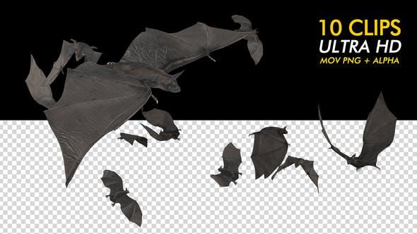 Thumbnail for Bats - Kit Pack of 10 - 4K
