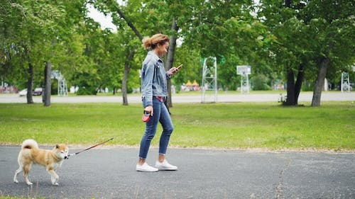 of Cheerful African American Girl Walking Her Pedigree Dog in City Park and Using Smartphone Going