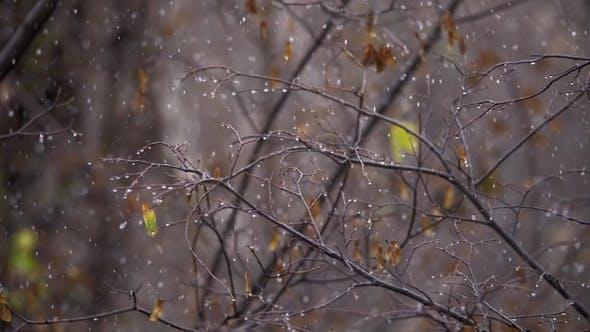 Thumbnail for Autumn Snowfall Scene
