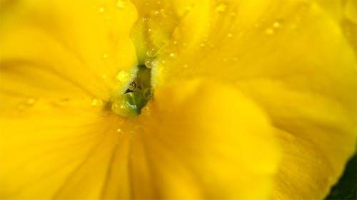 Rain flower petal macro
