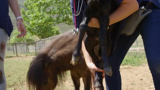 Thumbnail for Nurse holding a foal on the farm on a sunny day 4k