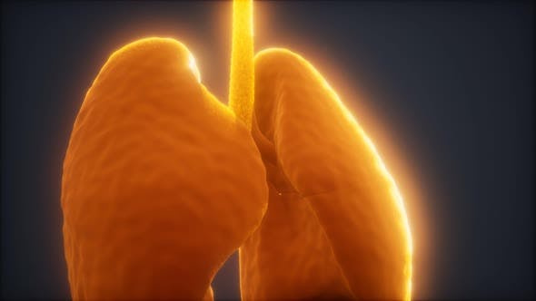Thumbnail for 3d Animation of Human Lungs