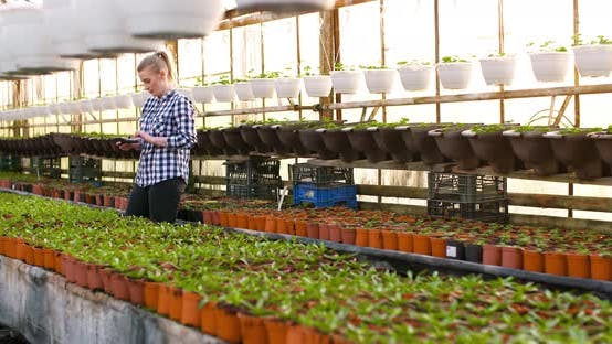 Cover Image for Close Up of Female Gardener Examining and Arranges Seedlings