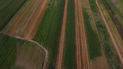 Shapes On Field Aerial View, Agriculture