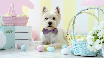 White Dog In Easter Decoration