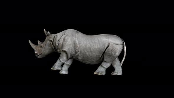 Thumbnail for 4K Rhino Run