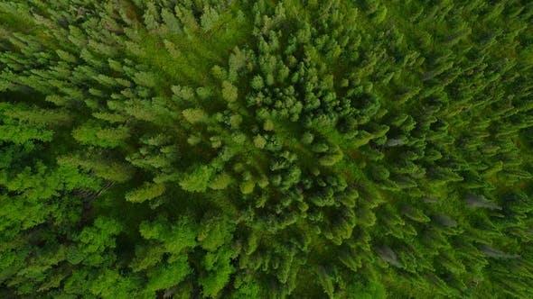 Thumbnail for Aerial Flythrough of Beautiful Alaska