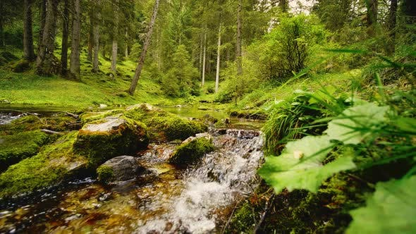 Thumbnail for Stream Flowing Along the Forest Landscape, Austria