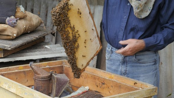 Beekeeper Pulls Out the Frame with Honey. Beekeeper Gets a Frame with Honey. Fumigation Machine for