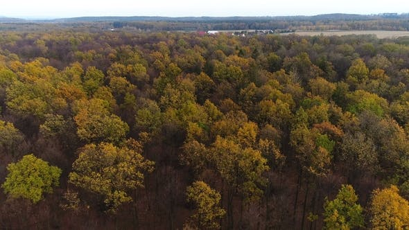 Thumbnail for Flying Over Autumn Forest. Forest From Above