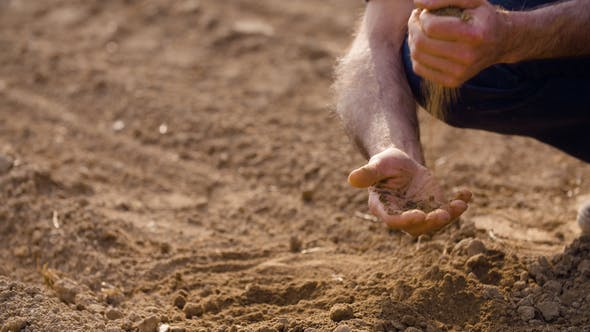 Thumbnail for Farmer Examining Soil Quality on Fresh Cultivated Field