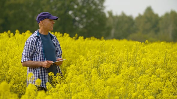 Researcher with Digital Tablet Examining Rape Blossom on Field