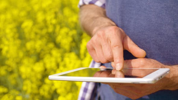 Thumbnail for Farmer Using Digital Tablet Examining Rape Blossom On Field