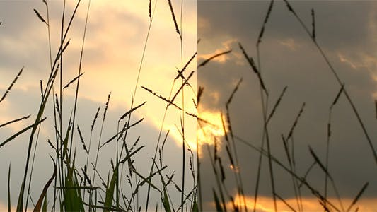 Thumbnail for Grass Silhoette At Sunset (Pack Of 2)