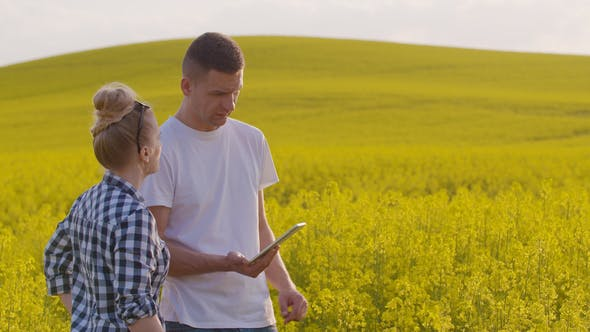Thumbnail for Farmers Discussing While Using Tablet Computer At Farm