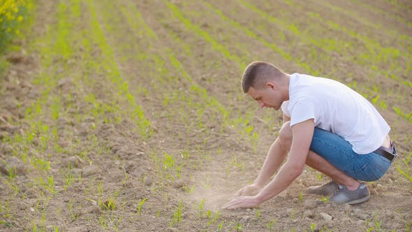 Thumbnail for Hands Examining Soil In Agricultural Field