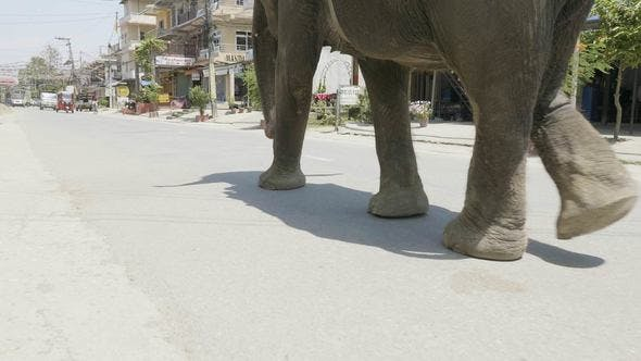 Thumbnail for Elephant Walks on the Street of the City in Asia