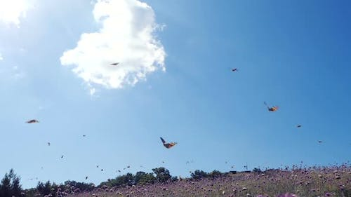 Lots of Butterflies in SLOW MOTION Over a Field Against Beautiful Blue Sky. Camera Moves Among