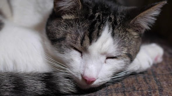 Thumbnail for Cute Tabby Cat Is Sleeping in Room, Opening Eyes and Yawning