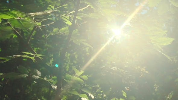 Thumbnail for Enchanting Sun Rays Beautiful Illuminating a Beech Forest in Vivid Shades of Fresh Green,  Shot