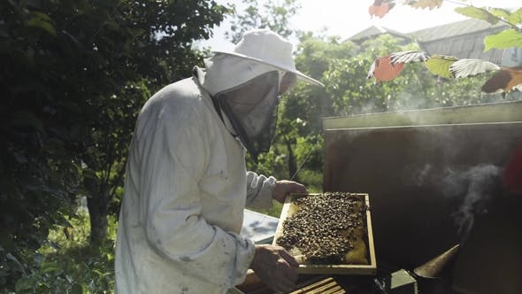 Thumbnail for Beekeeper in Protective Veil and Hat Inspecting Honeycombs with Bees