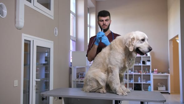 Thumbnail for Vet Making Injection To Dog's Scruff of Neck