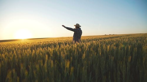 Glücklicher Bauer steht im Weizenfeld und bringt seine Hände zum hellen Himmel